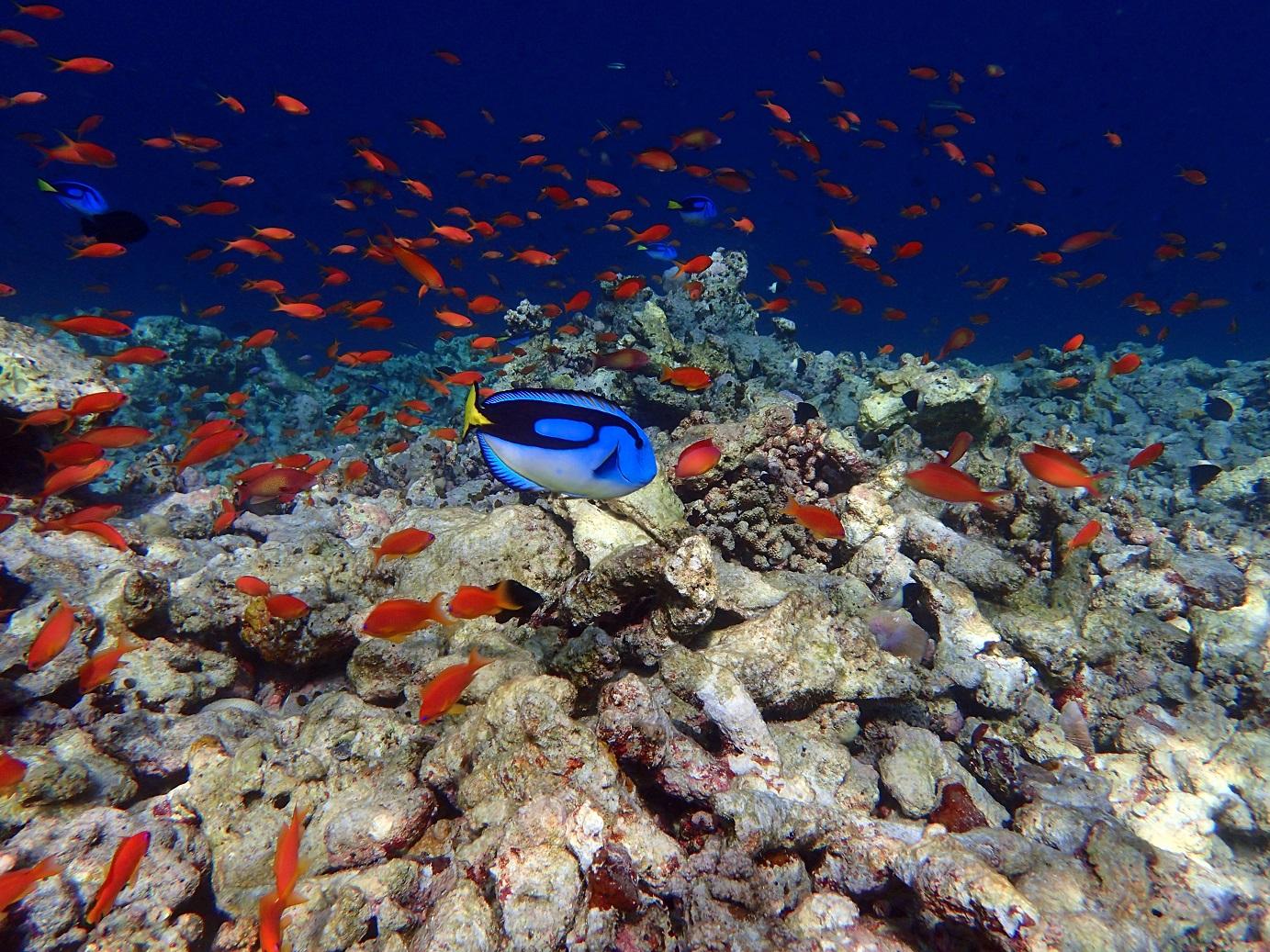 Especies marinas en Milaidhoo