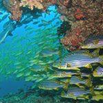 animales de maldivas