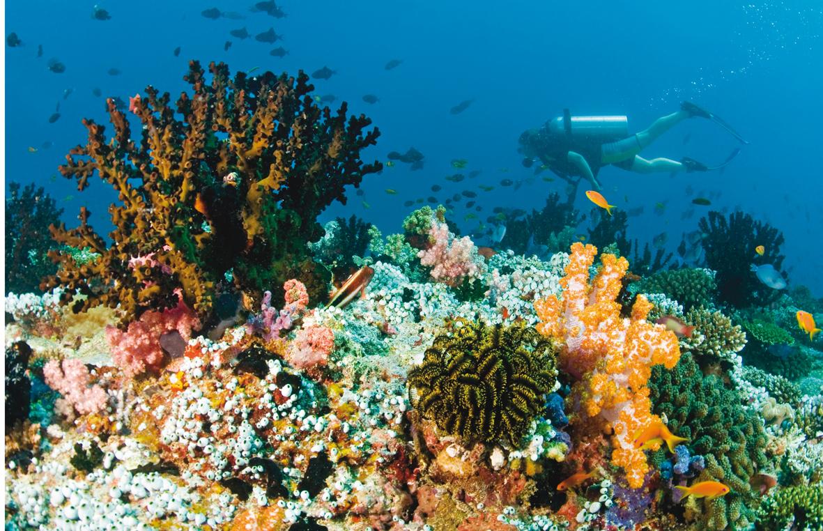 Mantarrayas en Maldivas
